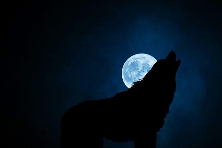wolf-dzen