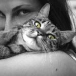 Канал Яндекс-Дзен для владельцев домашних животных «Хвостач». Каталог каналов Яндекс-Дзен.