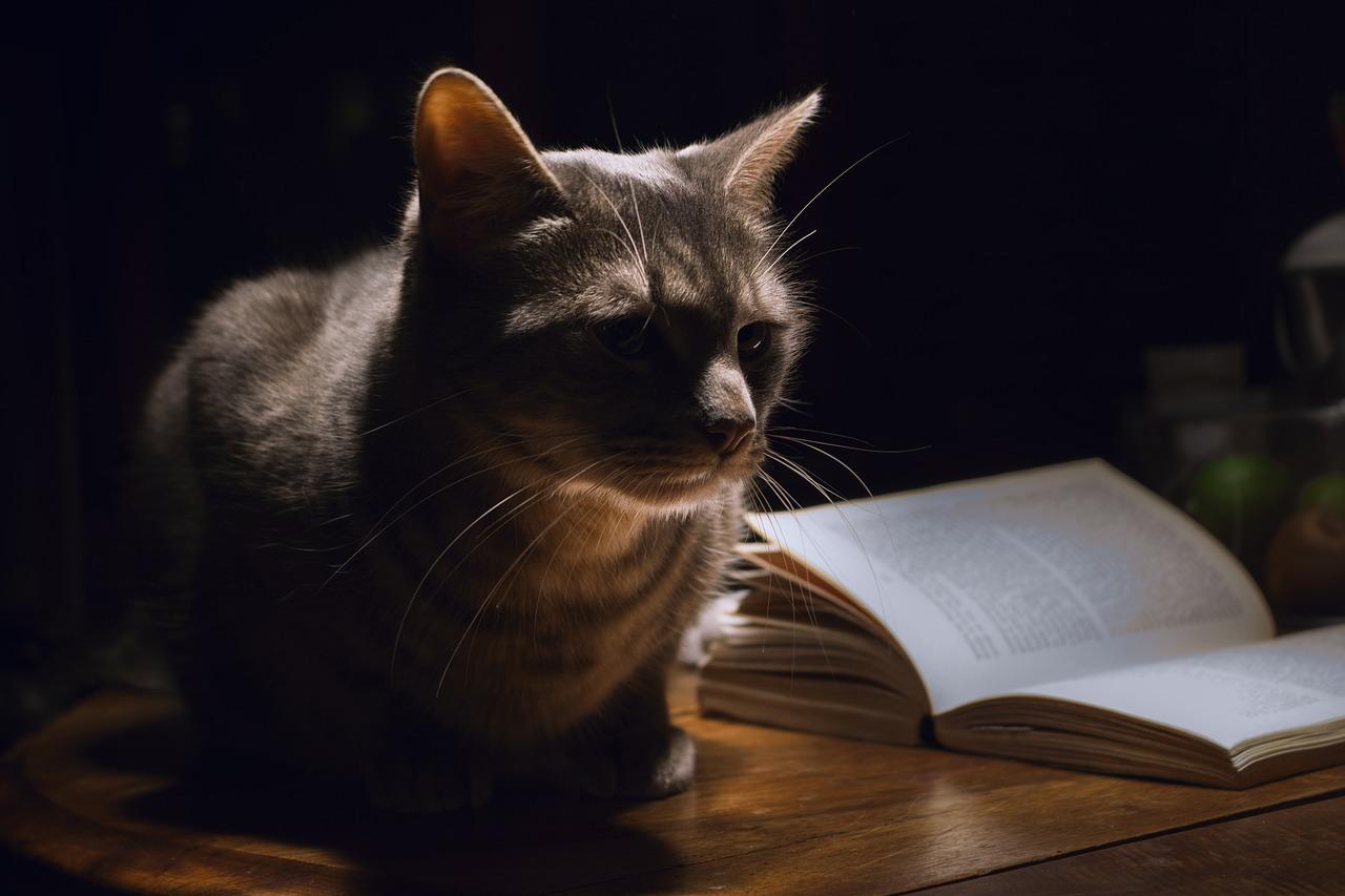 Уютный канал Яндекс-Дзен «3к: кино, книги, кот». Каталог каналов Яндекс-Дзен