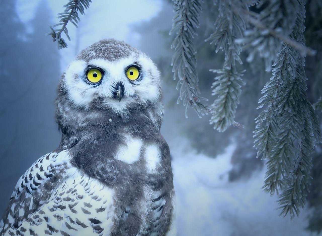 Канал Яндекс-Дзен о мистике «Необычное и невероятное». Каталог каналов Яндекс-Дзен.