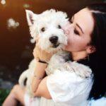 Канал Яндекс-Дзен о домашних животных «Прохвост». Каталог каналов Яндекс-Дзен