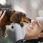Канал Яндекс-Дзен для любителей хвостатых братьев наших меньших «По жизни с собакой». Каталог каналов Яндекс-Дзен