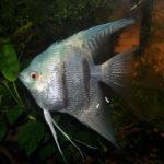 Канал Яндекс-Дзен для любителей аквариумных рыбок «Аква-Космос». Каталог каналов Яндекс-Дзен