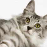 Канал Яндекс-Дзен о домашних животных «Нос, хвост, лапы». Каталог каналов Яндекс-Дзен