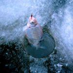 Канал Яндекс-Дзен для рыбаков «Хорошая рыбалка». Каталог каналов Яндекс-Дзен