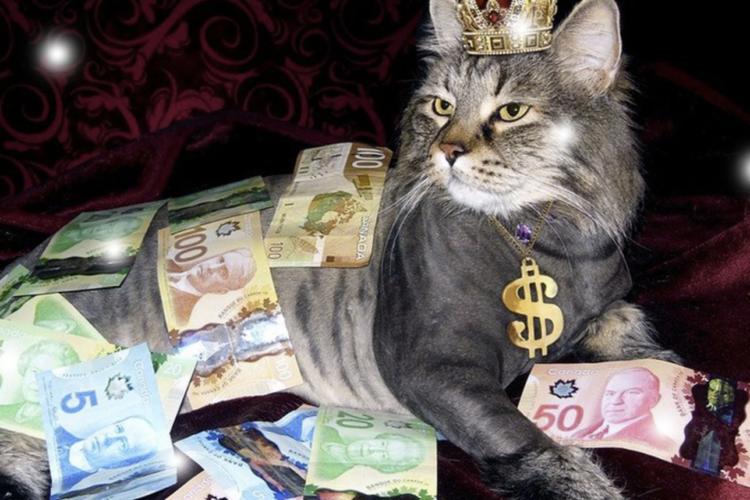 финансово-грамотный-яндекс-дзен