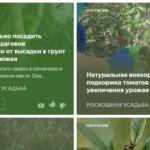 """Канал Яндекс-Дзен для дачников и огородников — """"Дачные хитрости"""". Каталог каналов Яндекс-Дзен"""